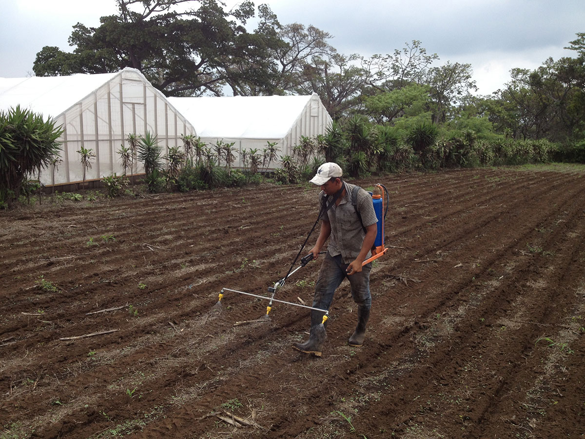 Here at Finca La Semilla We're Planting, Harvesting, and Praying for Rain - La Semilla Ministries